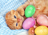 Red kitten lying on a plaid blanket with Easter colored eggs