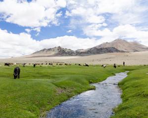 Idyllic Mongolian landscape full of grazing livestock
