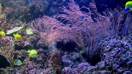 Group coral fish underwater.
