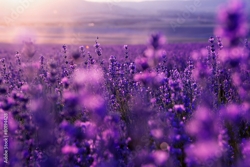 Fotobehang Lavendel blurred summer background of wild grass and lavender flowers