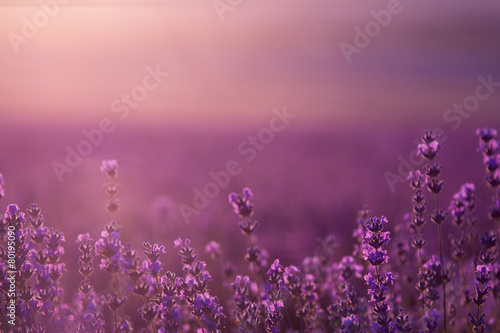 Deurstickers Lavendel blurred summer background of wild grass and lavender flowers