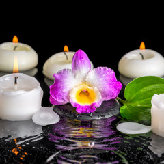 spa concept of purple orchid dendrobium, green leaf with dew and