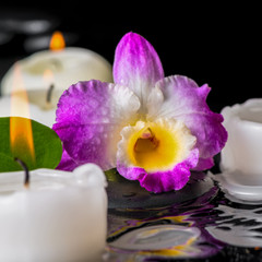 spa concept of purple orchid dendrobium, leaf with dew and candl