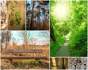 Wald-Collage