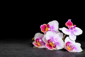 beautiful purple orchid phalaenopsis on black background with dr