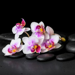 beautiful spa background of purple orchid phalaenopsis on black