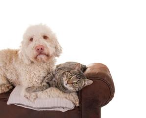 Hund und Katze auf Sofa