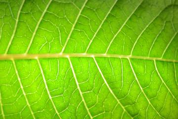 grüner Hintergrund Blatt
