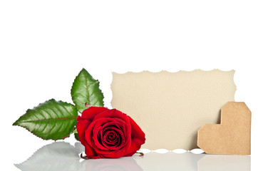 Red rose with valentine and blank gift card for text on white ba