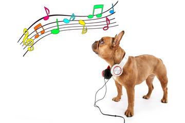 Bulldogge mit Kopfhörern