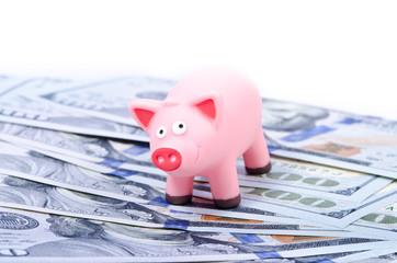 Pig on 100 bills