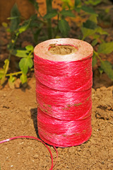 Pink coil on the soil
