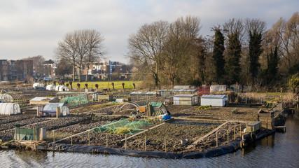 City gardening in Enkhuizen Netehrlands
