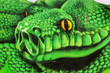 Green snake head graffiti on concrete wall - 80220887