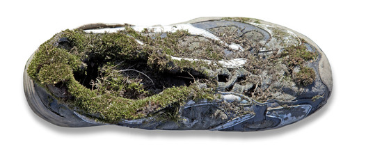 Covered with moss shoes on a white background