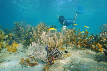 Man snorkeling underwater with corals and fish