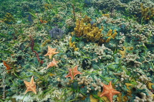 Colorful starfish and sea life underwater