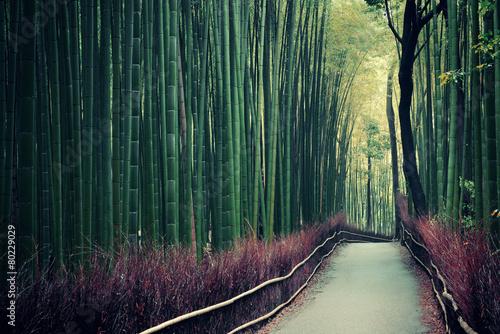 Papiers peints Kyoto Bamboo Grove