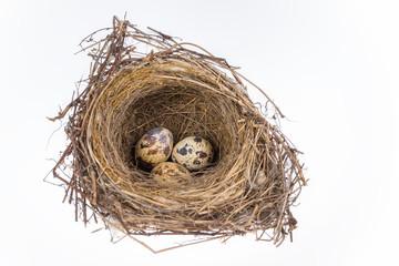 bird nest and eggs