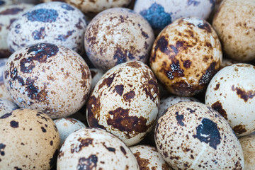 quail eggs closeup