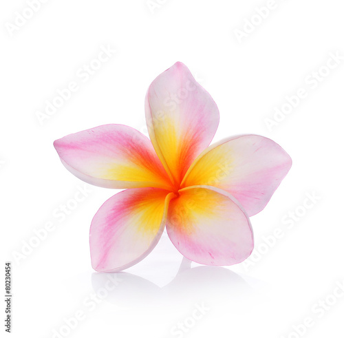 Foto op Plexiglas Frangipani colorful plumeria flower isolated on white backgrond