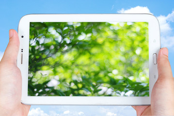 Tablet with blur tree on screen in hand over the blue sky