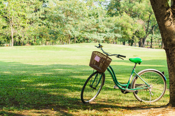 bicycle in garden park on sunny
