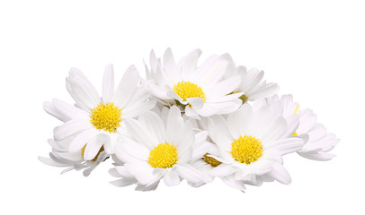 pile of chamomile flower isolated on white background
