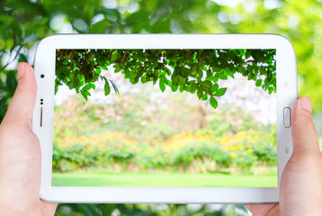 Tablet with blur tree and bokeh light on screen