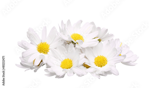 Poster Madeliefjes pile of chamomile flower isolated on white background