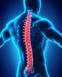Leinwanddruck Bild - Human Male Spine Anatomy