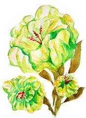 watercolor painting flower bloom green