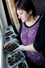 Woman looking at garden seedings in pot