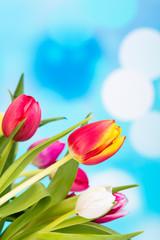 bunte tulpenblüten