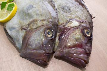 fresh fish isolated