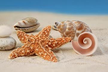 Seestern und verschiedene Muscheln auf Meersand