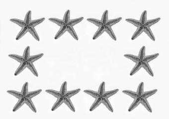 stelle marine su sfondo bianco