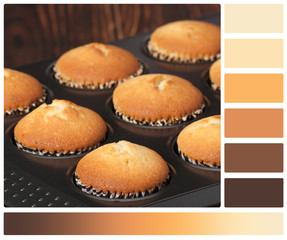 Plain Cupcakes In Baking Tray. Palette With Complimentary Colour
