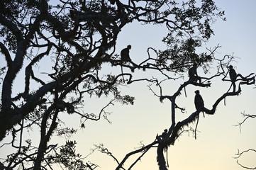 Monkeyin the setting sun in the jungle