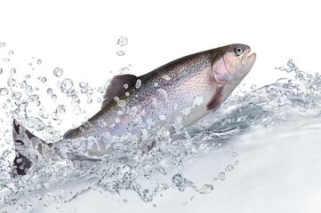 Fische 132