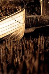 Sepia boat bow