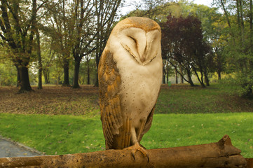 A wild Barn Owl  is resting on a tree trunk