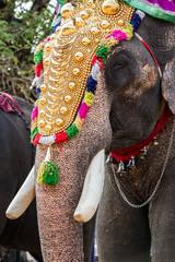 India elephant festival