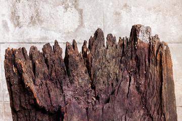 Old brown log