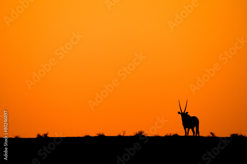Foto op Canvas Antilope oryx