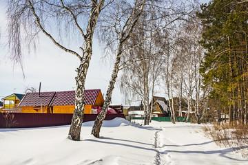 Деревенские дома среди берёз