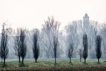 Filare di alberi spogli con campanile nella nebbia