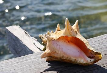 seashell at the beach Holiday summer Mexico
