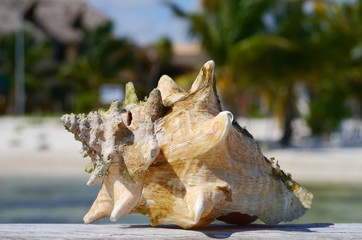 seashell at the beach Holiday summer Mexico