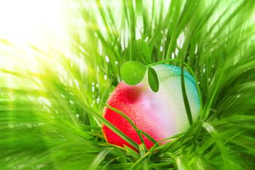 Easter egg in green grass .